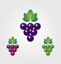 grapes logos vector image
