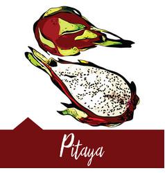 pitaya in hand-drawn graphics vector image
