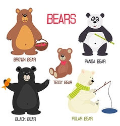 set isolated different bears vector image