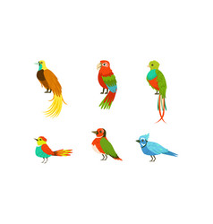 tropical exotic birds collection beautiful bright vector image