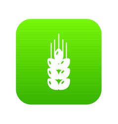 wheat icon green vector image