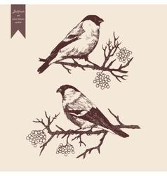 Bullfinch set hand drawn vector
