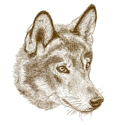 engraving wolf head vector image