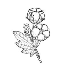 graphic cotton plants vector image vector image
