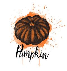 a pumpkin hand drawn vector image