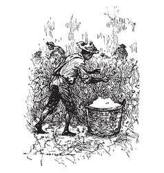 gourd fiddle vintage vector image
