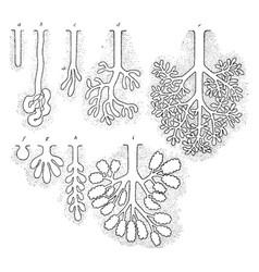 Types of glands vintage vector