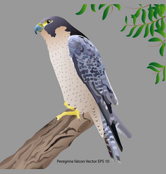 falco vector image