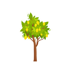 Flat icon of small tree with ripe lemons vector