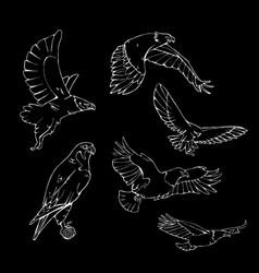Hand-drawn pencil graphics birds of prey set vector