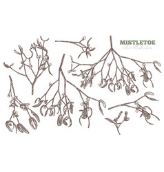 set sketch hand drawn mistletoe vector image