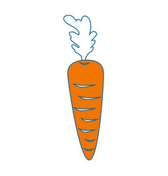isolated cute carrot vector image vector image