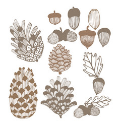 310 cones and acorns vector image