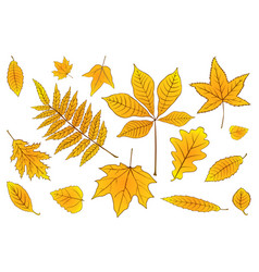 set autumn leaves orange on white eps 10 vector image