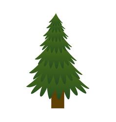 pine tree plant icon vector image vector image
