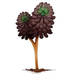 A voodoo aeonium plant vector