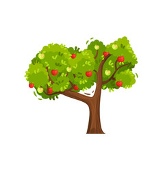 big green tree with ripe apples on branches vector image