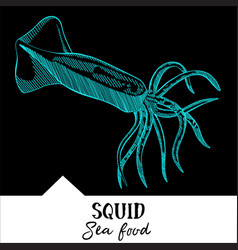 Squid for a seafood menu vector