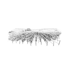 Vineyard landscape france sketch design vector