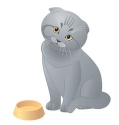 Hungry cute kitten vector