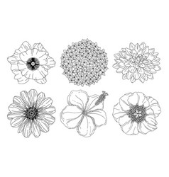 collection set summer flowers poppy hydrangea vector image
