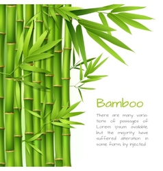 Realistic bamboo background vector