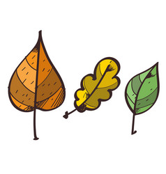 three leaves from the trees clipart color on a vector image