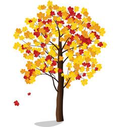 autumn maple vector image