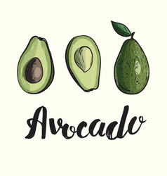 avocado cartoon vector image