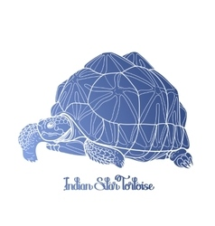Indian star tortoise vector image