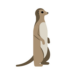 Meerkat flat on white vector