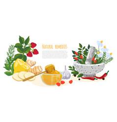 Natural remedies or folk medicine banner vector