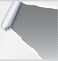 Realistic torn open paper with space for text on vector