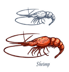 shrimp prawn seafood isolated sketch icon vector image