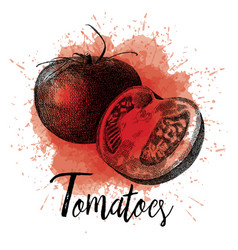Tomatoes in hand drawn vector