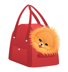 Happy Pomeranian spitz vector image vector image