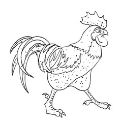 cartoon image of rooster vector image