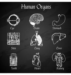 Human Organs Chalkboard Icons vector image