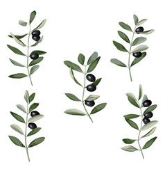 Olive branch set in watercolor style vector