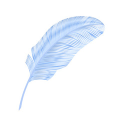 Realistic feather elegant element blue bird vector