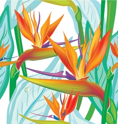 Seamless floral pattern with Strelitzia on white vector