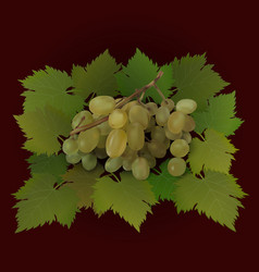 Bunch of grapes on green grape leaves vector