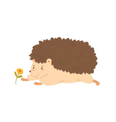 Funny hedgehog crawling to flower flat vector
