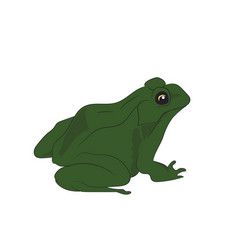toad sitting vector image