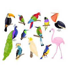 Tropical exotic birds bright color parrots vector