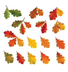 Autumn leaves isolated on white background fall vector