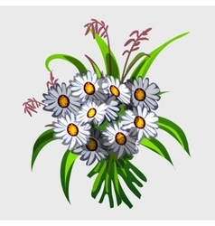 Bouquet white wildflowers vector