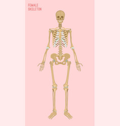 female skeleton image vector image