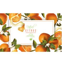Mandarin vertical banners vector