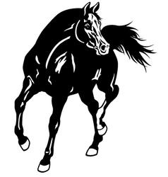 arabian horse black white vector image vector image